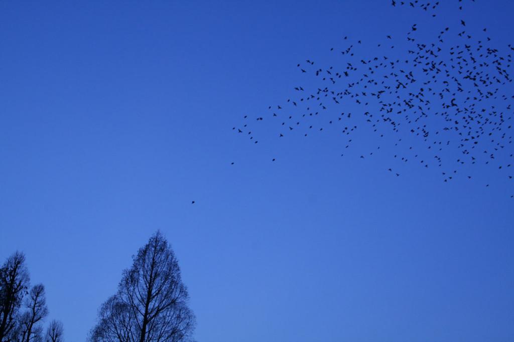 井の頭公園の夕暮れと鳥
